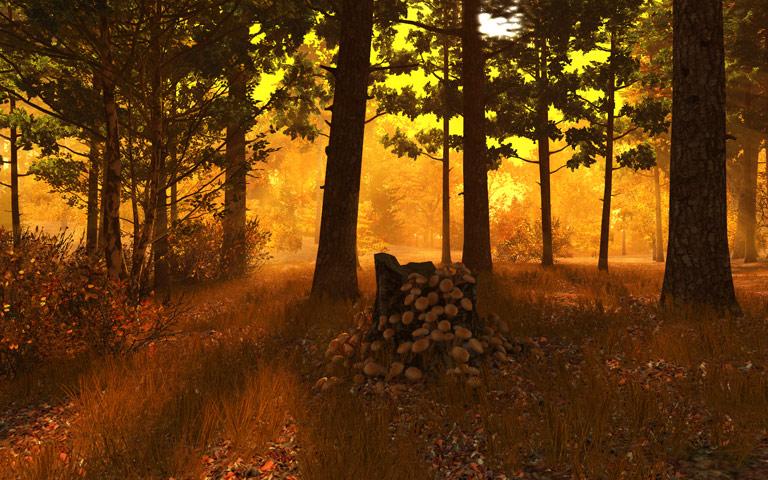 http://ru.3planesoft.com/img/autumnforest_widescreen04.jpg