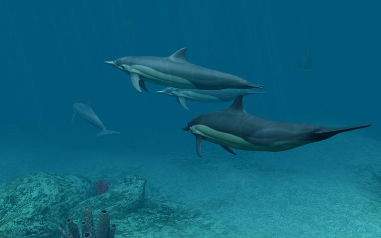 http://ru.3planesoft.com/img/dolphins_widescreen02.jpg
