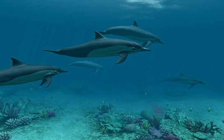 http://ru.3planesoft.com/img/dolphins_widescreen03.jpg