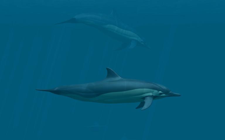 http://ru.3planesoft.com/img/dolphins_widescreen04.jpg