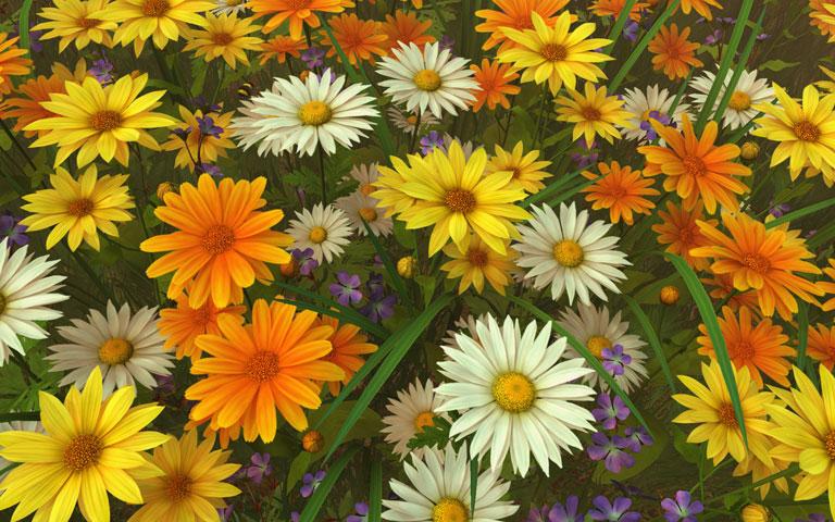 http://ru.3planesoft.com/img/wildflowers_widescreen01.jpg